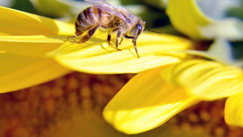 Arıların bal mesaisi başladı