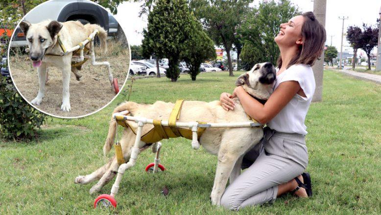 Edirne'de esnafın el uzattığı köpek hayata tutunamadı