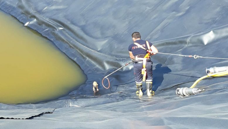 Havuza düşen köpekler kurtarıldı