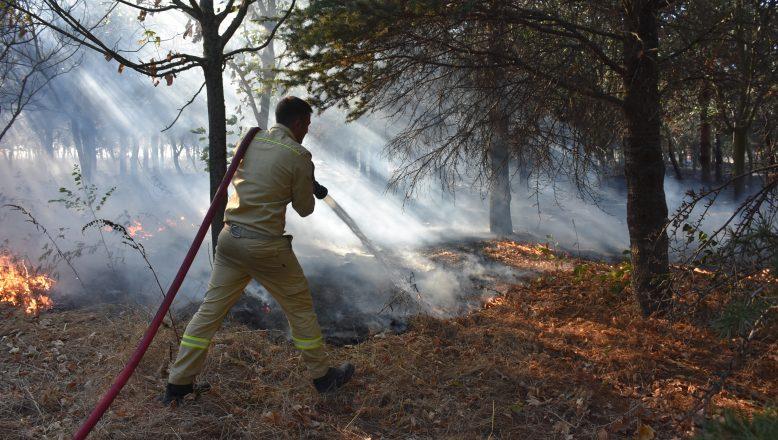 Hatıra Ormanında yangın çıktı