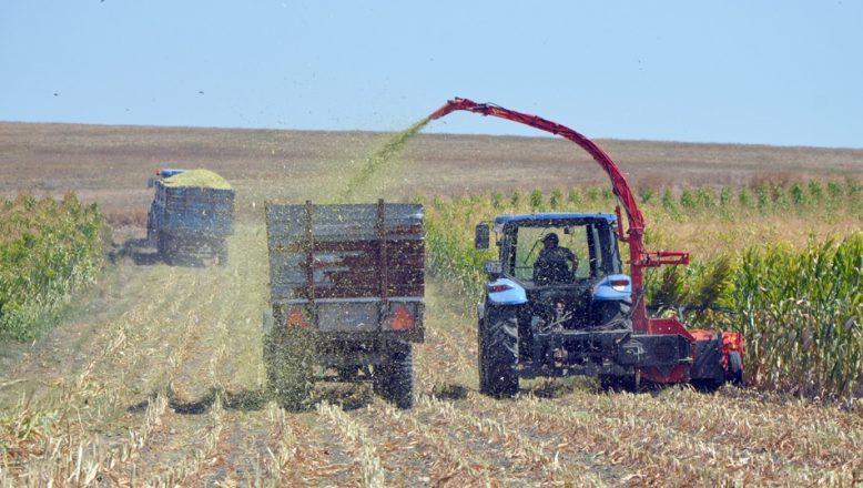 Tekirdağ'da çiftçilerin 'silaj' mesaisi