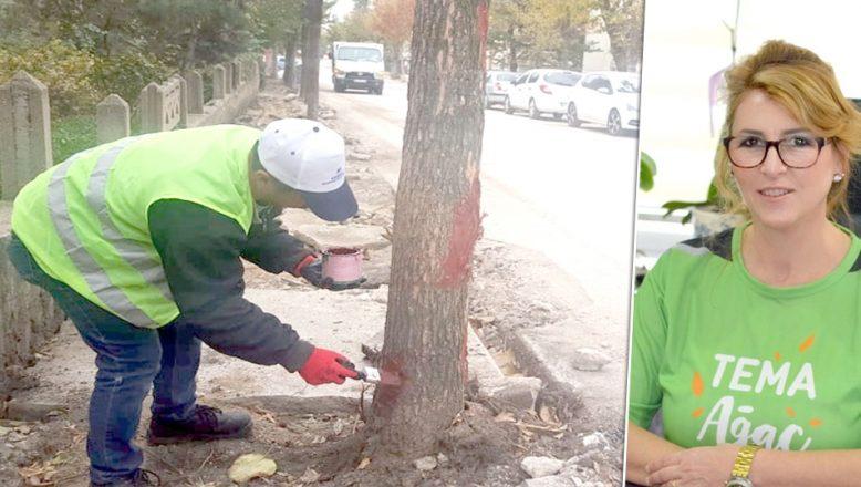 Ağaçların yaraları macunlandı