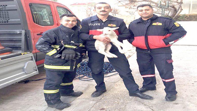 Apartman boşluğuna düşen kuzu kurtarıldı