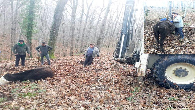 Çamura saplanan gebe inek kurtarıldı