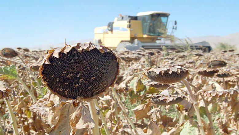 Edirne'de desteklenecek tarım ürünleri açıklandı