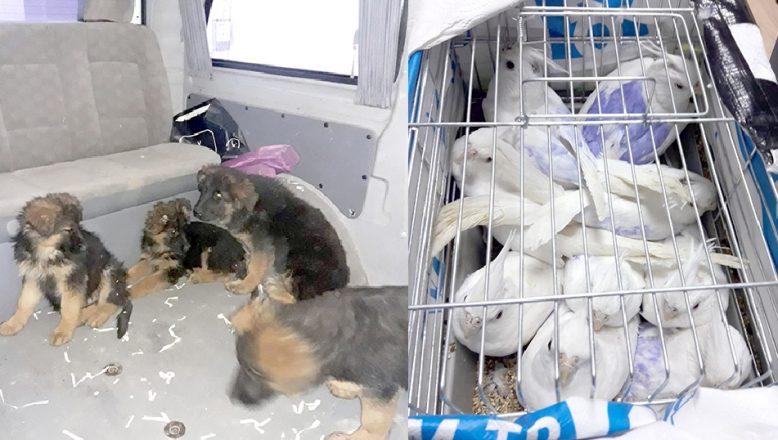Kaçak köpek yavrusu ve papağanlara el konuldu