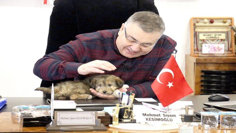 Belediye Başkanı makamını sokak köpeğine açtı