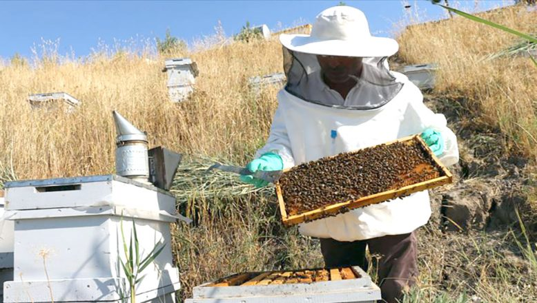 Arıcılar, destek için Ulusal Arıcılık Programına başvurabilir