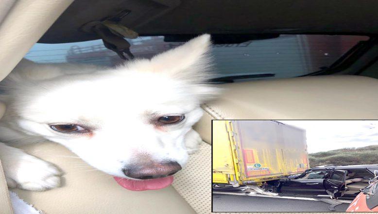 Köpeğe, itfaiye ekipleri sahip çıktı