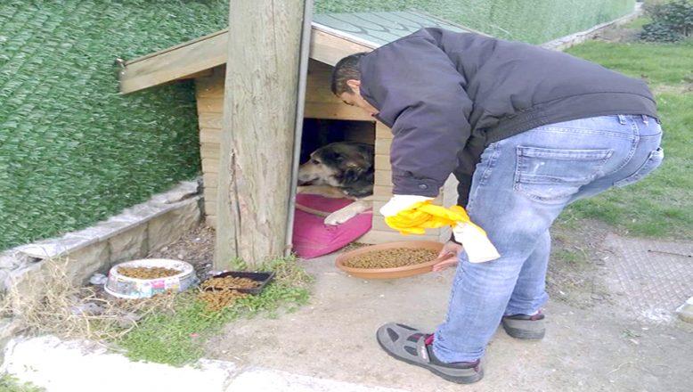 Sokak hayvanlarına mama takviyesi