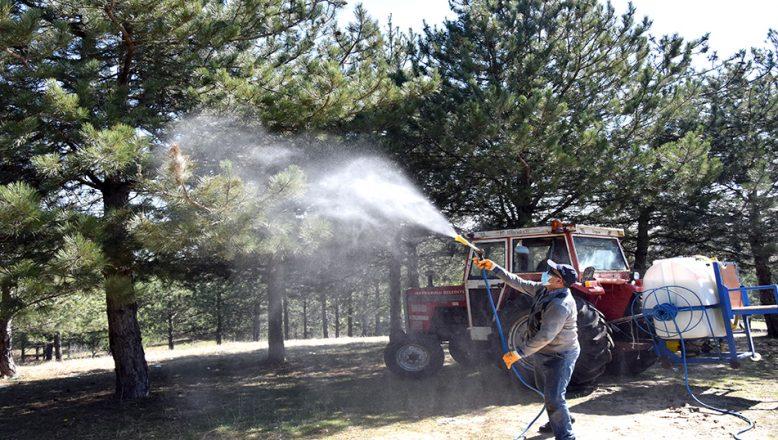 Çam Kese Böceği'ne karşı mücadele