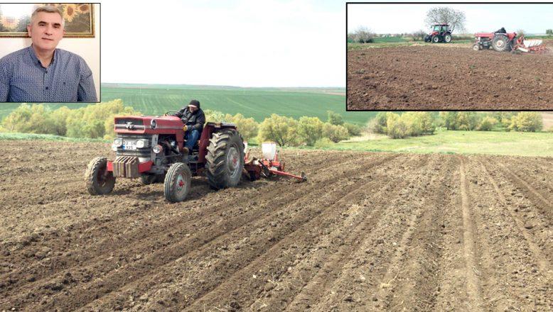 Ayçiçeği tohumları, toprakla buluşuyor