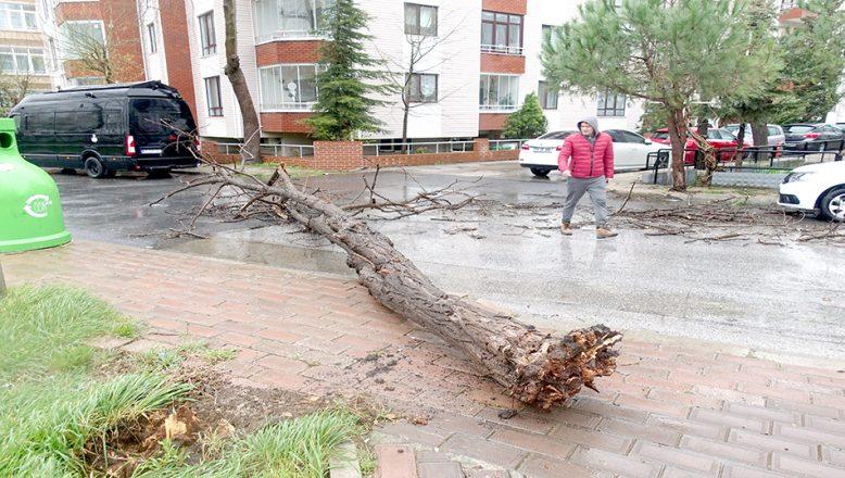 Fırtına ağaçları kökünden söktü, çatıları uçurdu!