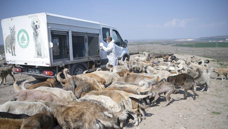 Günde 400 sokak hayvanı besleniyor