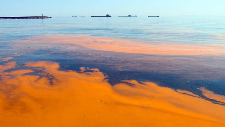 Marmara Denizi'nin rengi turucu oldu