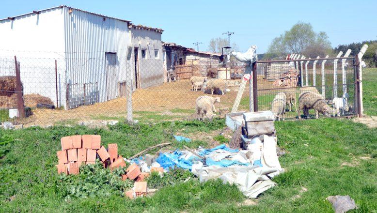 Çiftlikten, 20 koyun çalındı