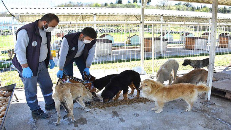 Hayvanseverlerden, barınaktaki hayvanlara mama desteği