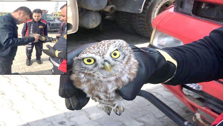 Uçurtma iplerine takılan baykuşu, itfaiyeciler kurtardı