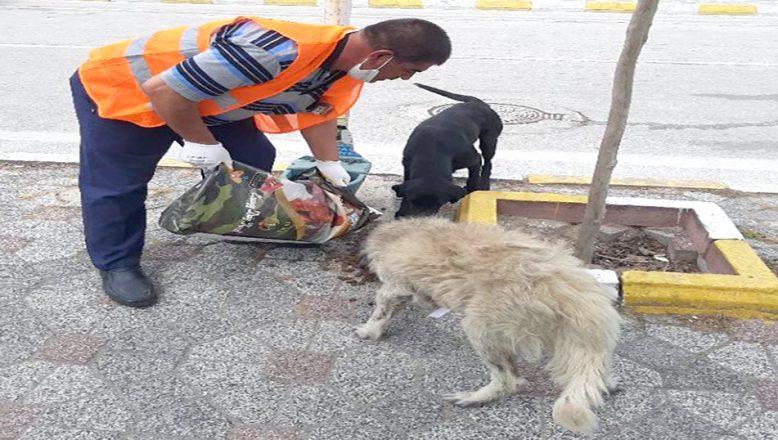 Sokak hayvanları düzenli olarak besleniyor