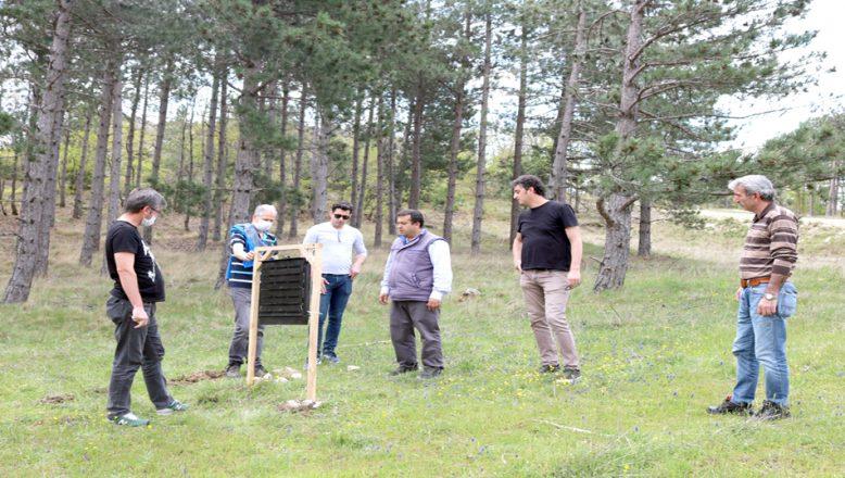 'Orman İçin Sağlık' projesi