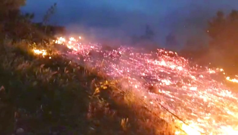 Bursa'da makilik alanda yangın