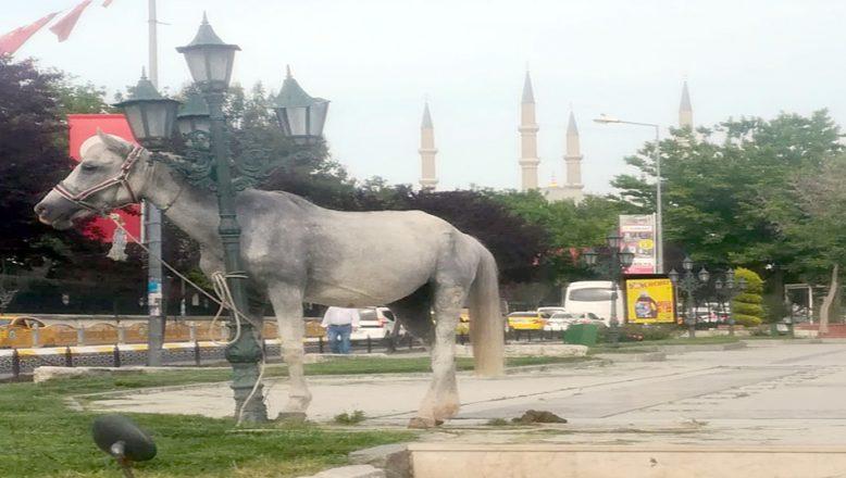 Atatürk Anıtı önünde şaşırtan görüntü!