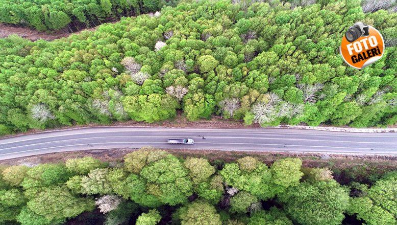 Longoz ormanları en sakin günlerini yaşıyor