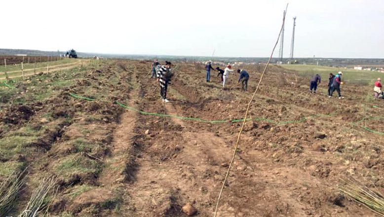 Süloğlu'nda 50 dekarlık alan ağaçlandırıldı