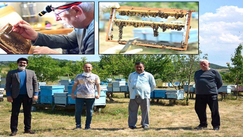 Arı Islah Projesi ile larva transferi yapıldı