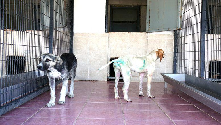 """Bilgin: """"12 köpeği katleden şüpheliler tespit edildi"""""""