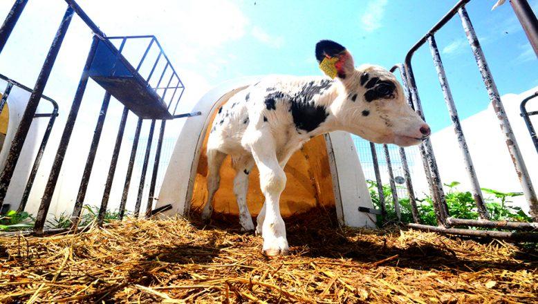 TİGEM, Trakya'nın tarım ve hayvancılığına büyük katkı sağlıyor