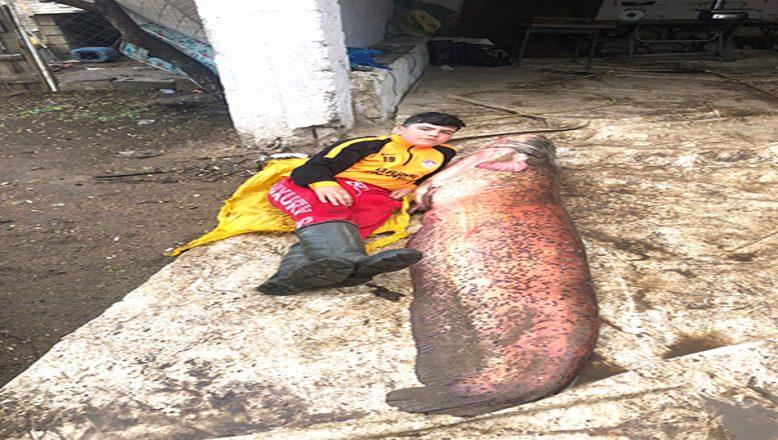 109 kiloluk yayın balığı yakalandı