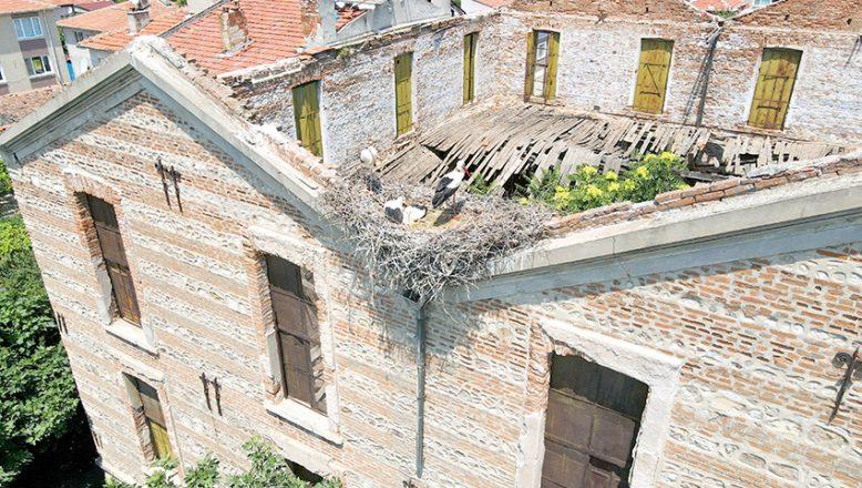 Tarihi koza fabrikası leyleklere yuva oldu