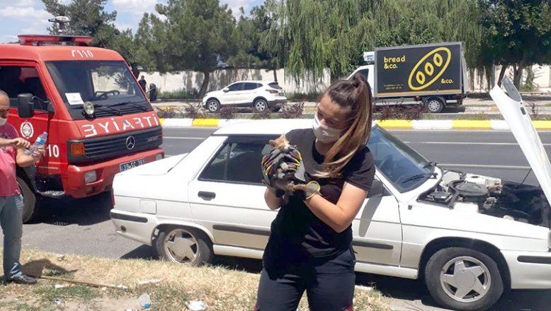 Otomobilin motoruna sıkışan kedi kurtarıldı
