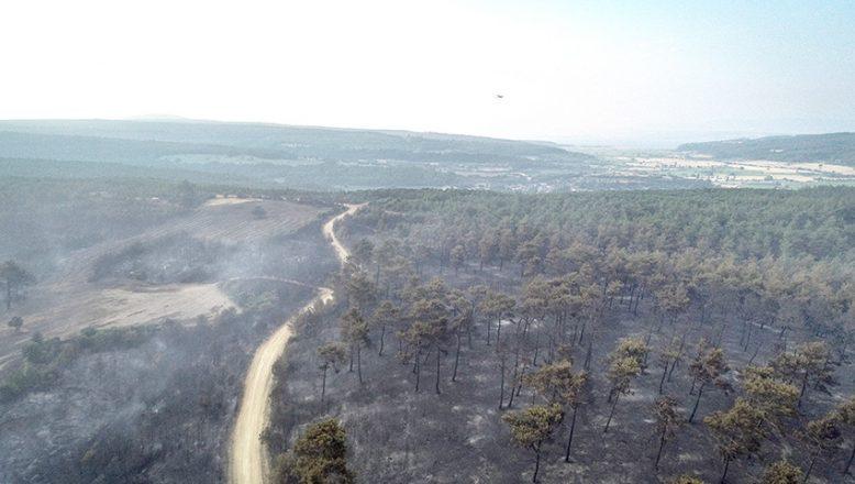 Orman yangını kontrol altına alındı… 450 hektar alan küle döndü!
