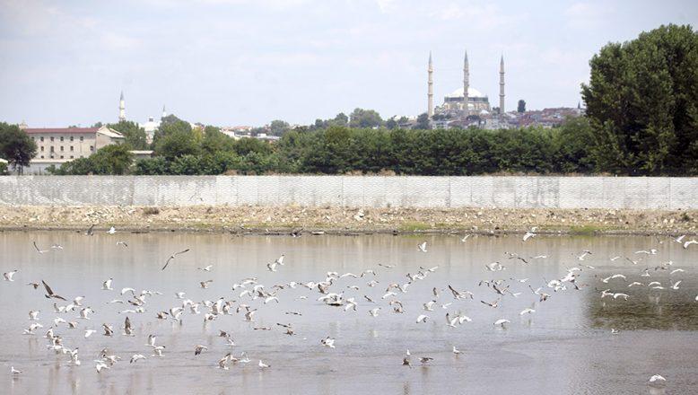Meriç Nehri martıların uğrak mekanı oldu