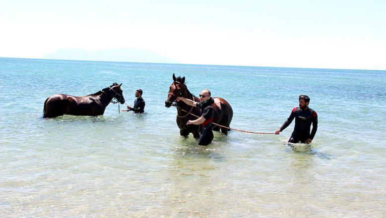 Şampiyon atlar Saros'da form tutuyor