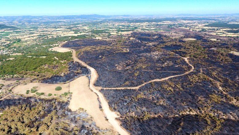 Çanakkale'de yanan ormanlık alanı yeniden ağaçlandıracak