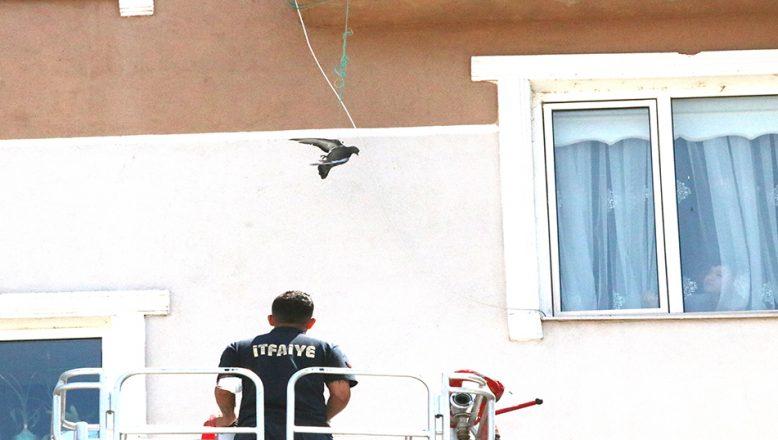 Kanadı ipe takılan güvercin kurtarıldı