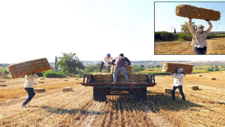 Kavurucu sıcaklarda, zorlu ekmek mücadelesi