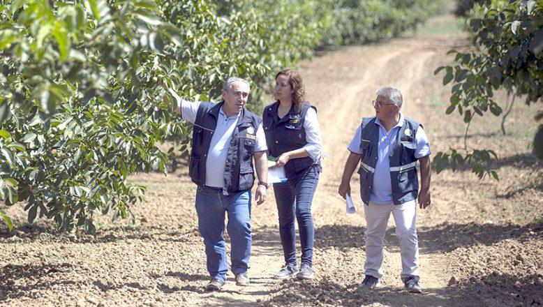 Orman köylüleri ceviz ve badem ağaçlarından 435 milyon lira gelir bekliyor