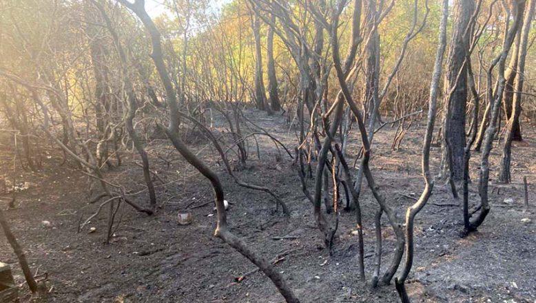 Korudağı'ndaki orman yangını söndürüldü