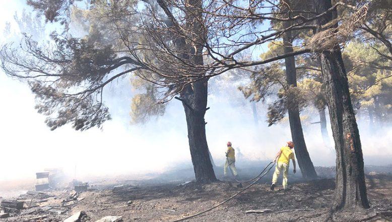 Ormanlar yine alev alev… Yangına havadan ve karadan müdahale ediliyor
