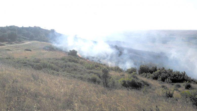 Mera yangınında 250 dönüm alan zarar gördü