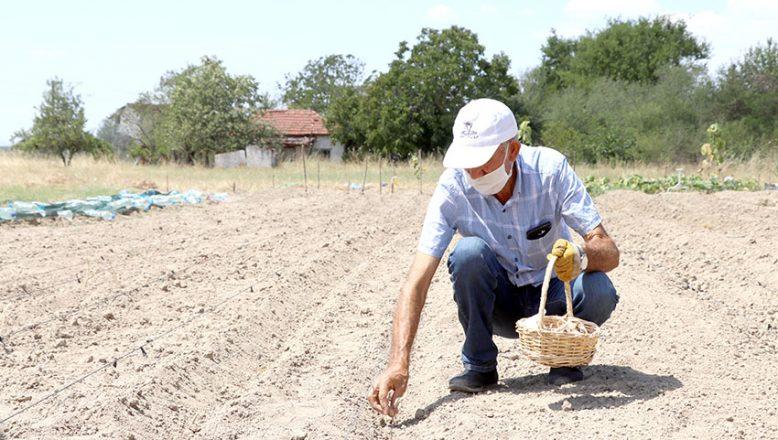 Gezmek için Safranbolu'ya gitti Edirne'de safran üreticisi oldu