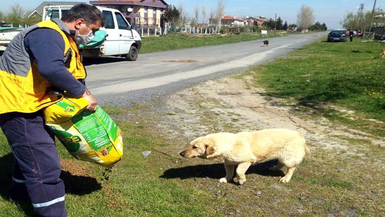 8 ayda 248 hasta ve yaralı sokak hayvanı tedavi edildi