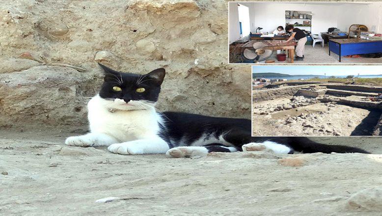 Topraktan çıkarıp hayata döndürdüğü kedi, kazı alanının maskotu oldu
