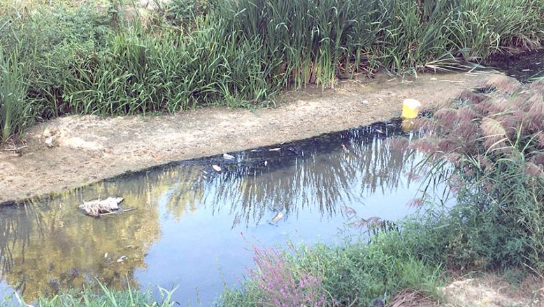 Deredeki balık ölümleri araştırılıyor
