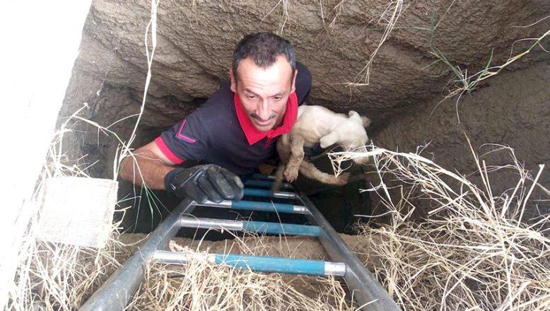 Çukura düşen yavru köpeği, itfaiye kurtardı
