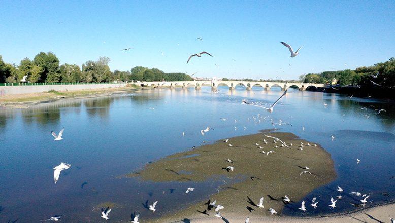 Meriç Nehri'nin ortasında oluşan adacıklar martıların yuvası oldu